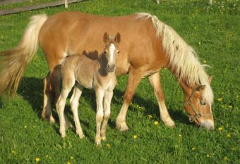 pferdespiele mit reiten